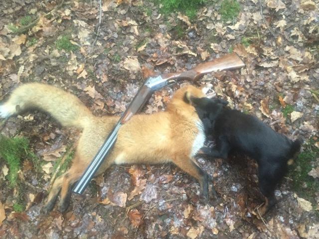 Hivlingen's Quilla med dagens gryträv sprängd efter perfekt hundarbete
